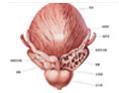 男性前列腺增生检查有哪